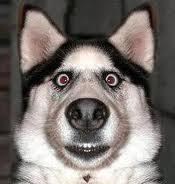 Cachorro assustado