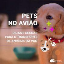 Transporte de animais de estimação em avião: dicas e regras para o seu embarque
