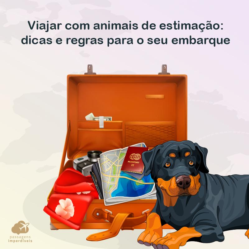 Transporte de animais de estimação em voos: dicas e regras para o seu embarque