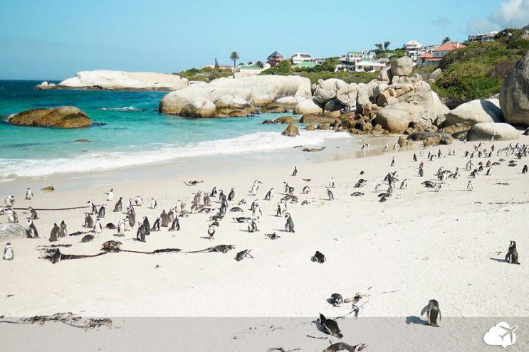 boulders beach praia pinguins cidade do cabo