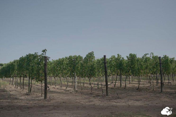 groot constantia vinicola de cape town