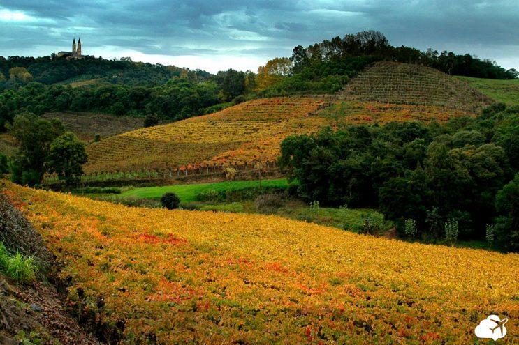 vale dos vinhedos regiao sul brasil