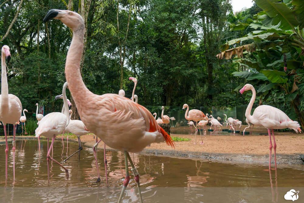 parque aves foz do iguaçu