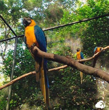 Parques das Aves Foz do Iguaçu