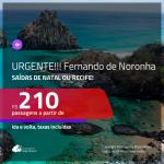 CORRE!!! URGENTE!!! Promoção de Passagens para <b>FERNANDO DE NORONHA</b>! A partir de R$ 210, ida e volta, c/ taxas!