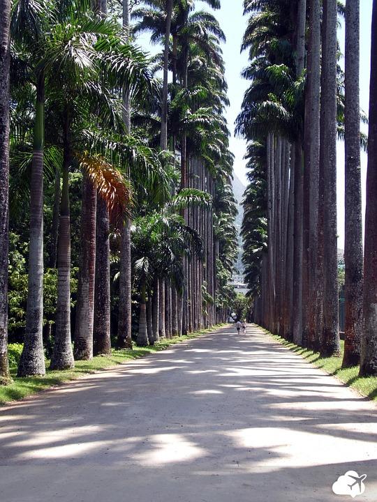 o jardim botânico do rio de janeiro é incluído no roteiro de boa parte dos turistas que visitam a cidade