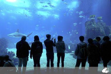 oceanário de lisboa viajar nas férias