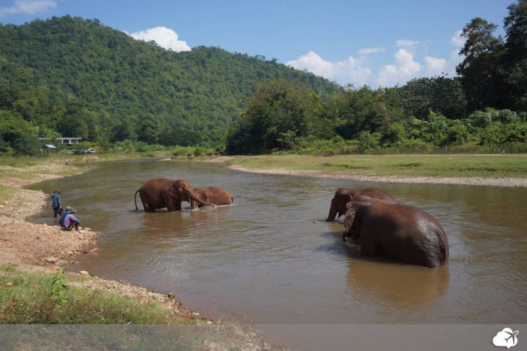 elefantes tomando banho