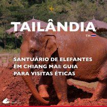 Santuário de elefantes em Chiang Mai: guia para visitas éticas