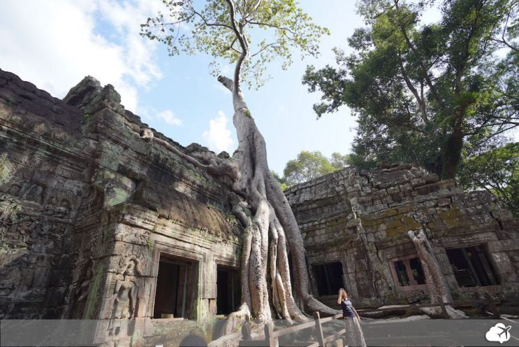 ta prohm angkor tomb raider
