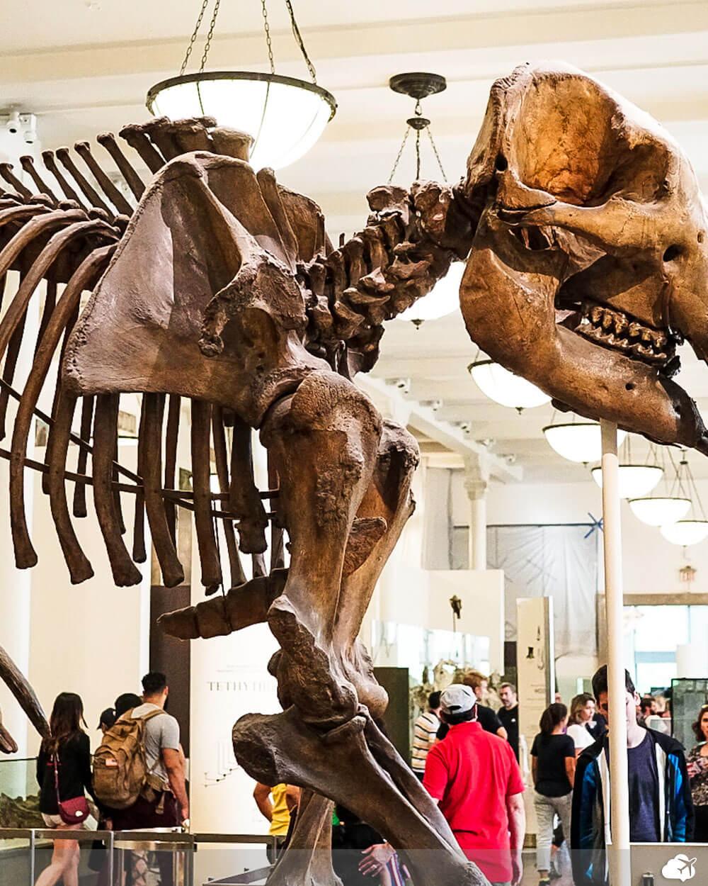 museu de historia natural em nova york